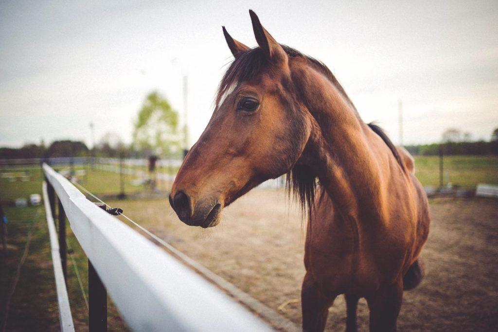 Häst arrivet