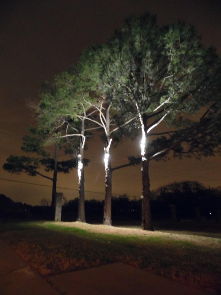 tree lighting TBN 6
