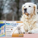 How Nexgard Spectra Gard Is Killing Fleas And Ticks Effectively