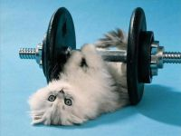 Why Exercise is Important for Your Feline Friend