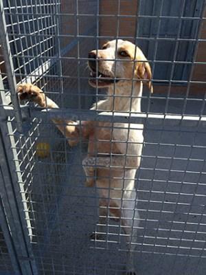 Centro de Protección Animal de Arroyomolinos