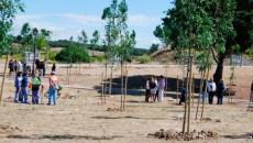 Un niño un árbol en ArroyomolinosUn niño un árbol en Arroyomolinos