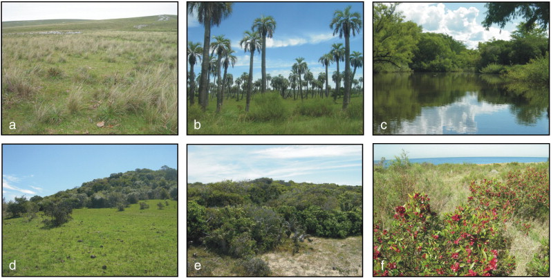 Vegetation of the Campos