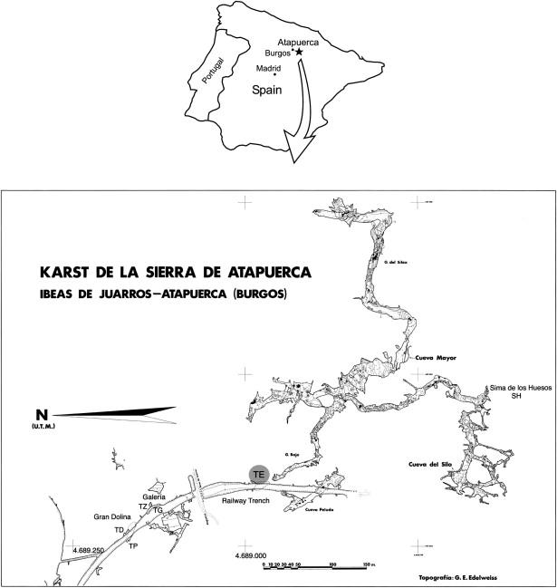 human mandible diagram payne heat pump wiring early pleistocene from sima del elefante te cave download full size image