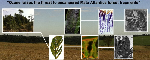 Colors fade, materials rot, poles break and fabric tears. Ozone Affects Leaf Physiology And Causes Injury To Foliage Of Native Tree Species From The Tropical Atlantic Forest Of Southern Brazil Sciencedirect