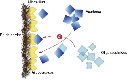 Acarbose - an overview | ScienceDirect Topics