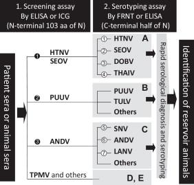 Serological diagnosis with recombinant N antigen for hantavirus ...