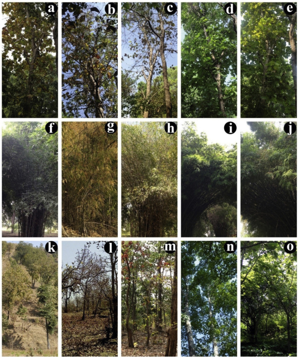 Red river hogs have peculiar features. Seasonal Variations In Phenology And Productivity Of A Tropical Dry Deciduous Forest From Modis And Hyperion Sciencedirect