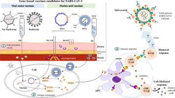 advances in gene based vaccine