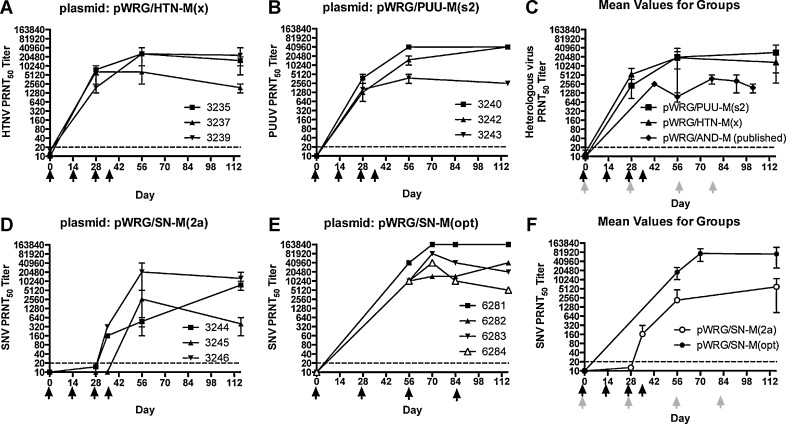 A novel Sin Nombre virus DNA vaccine and its inclusion in a ...