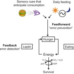 Msh Brain Wiring Diagram Plug And Switch Toward A Understanding Of Appetite Control Download Full Size Image