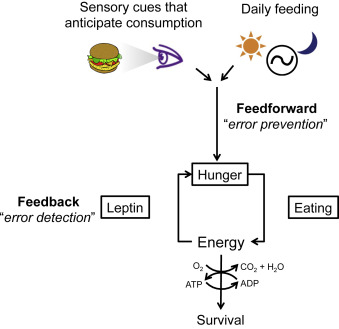 msh brain wiring diagram 2006 honda civic hybrid toward a understanding of appetite control download full size image