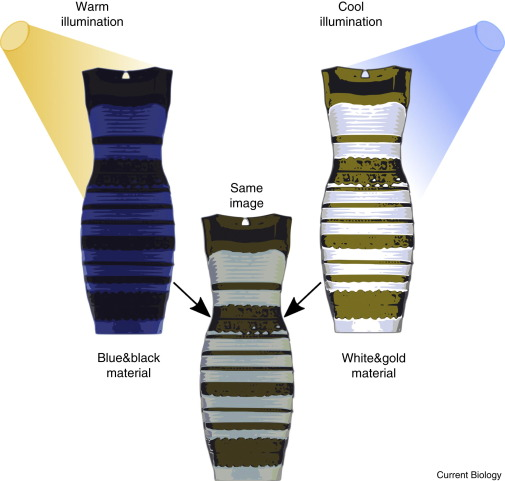 colour vision understanding thedress