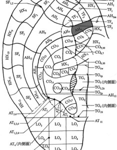 Download full size image also auricular acupuncture diagnosis in patients with lumbar hernia rh sciencedirect