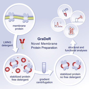 GraDeR: Membrane Protein Complex Preparation for Single-Particle ...
