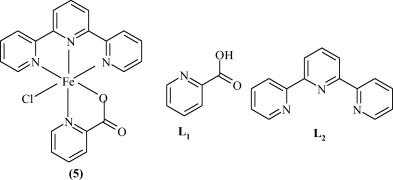 Design and mechanism of iron catalyzed carbon–carbon bond