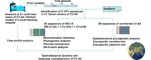 Spatiotemporal phylogenetic analysis and molecular characterization ...