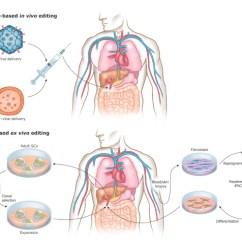 In Vivo Gene Therapy Diagram Weber 40 Idf Parts Advances Therapeutic Crispr Cas9 Genome Editing Sciencedirect Download Full Size Image