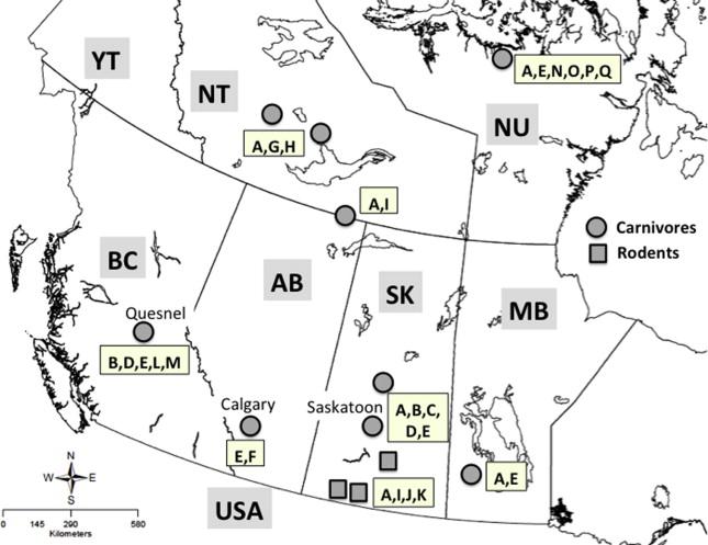 Unexpected diversity of the cestode Echinococcus multilocularis in ...