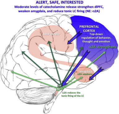 During nonstressed arousal conditions when the subject is alert, safe and ...