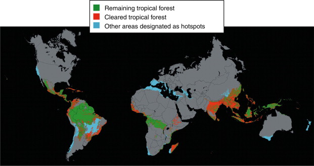 The traditional seasons of spring, summer, fall and winter are absent in rain fore the tropical rain forest has two seasons: Tropical Rain Forests An Overview Sciencedirect Topics