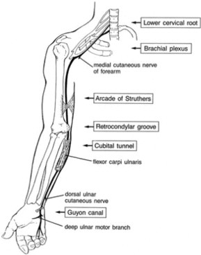ulnar nerve diagram origami gun entrapment an overview sciencedirect topics sign in to download full size image