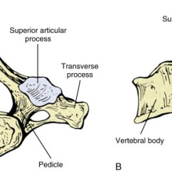 Cervical Vertebrae Diagram Yamaha G16 Gas Golf Cart Wiring Seventh Vertebra An Overview Sciencedirect Topics Sign In To Download Full Size Image