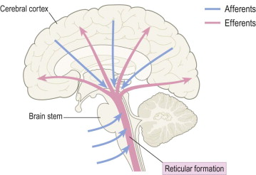 reticular formation diagram bass wiring an overview sciencedirect topics sign in to download full size image