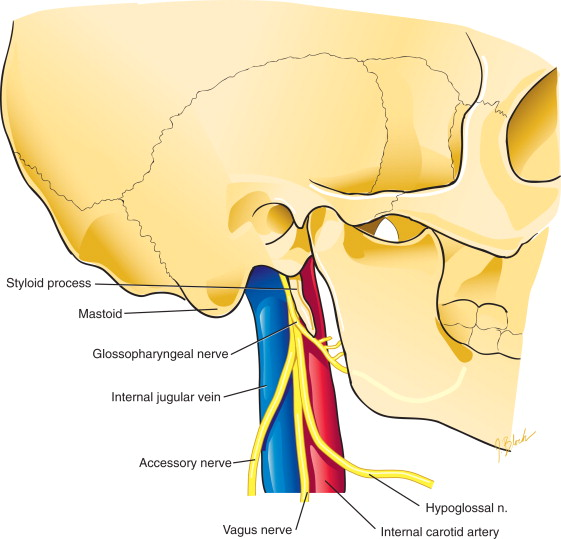 vagus nerve diagram 2006 yamaha raptor 700 wiring glossopharyngeal an overview sciencedirect topics sign in to download full size image
