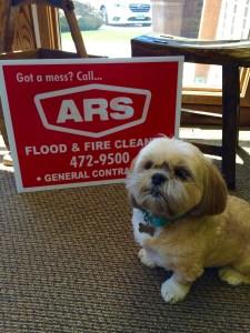 ARS Flood & Fire Cleanup Disaster Dog Pets Safe
