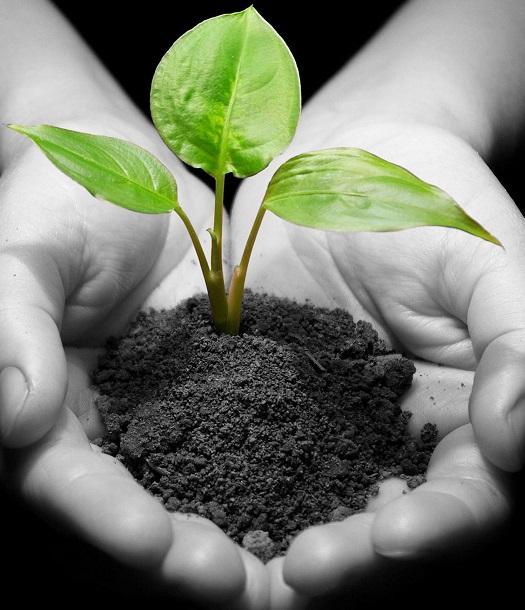 """""""الان"""" مقال عن البيئة بالانجليزي   برجراف عن البيئة Korixa"""