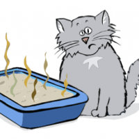 Easy Way to Keep Litter Boxes Clean