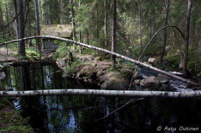 Myllyn vieressä meni toinen puro. Muurahaiset käyttävät tuota koivua valtatiensä siltana.