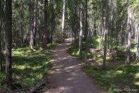Multiharjun aarniometsä on kirveenkoskematonta ikimetsää, jota luonnehtivat vanhat, jopa satojen vuosien ikäiset puut sekä kuolleiden puiden suuri määrä. Metsä uudistuu hitaasti. Vain myrsky tai kulu voivat luoda uutta valoisaa kasvutilaa. Lähde: infokyltti