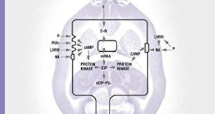Behavioral Neuroendocrinology PDF
