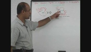 Cardiac Cycle - Systole & Diastole - Dr  Najeeb Lectures