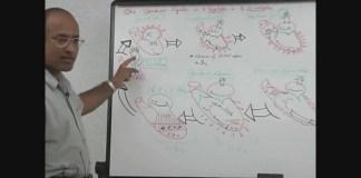 Cardiac Cycle - Systole & Diastole 5