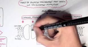 (Passive) Diffusion - Simple and Facilitated