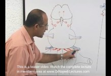 Brainstem - Structure & Function - Neuroanatomy