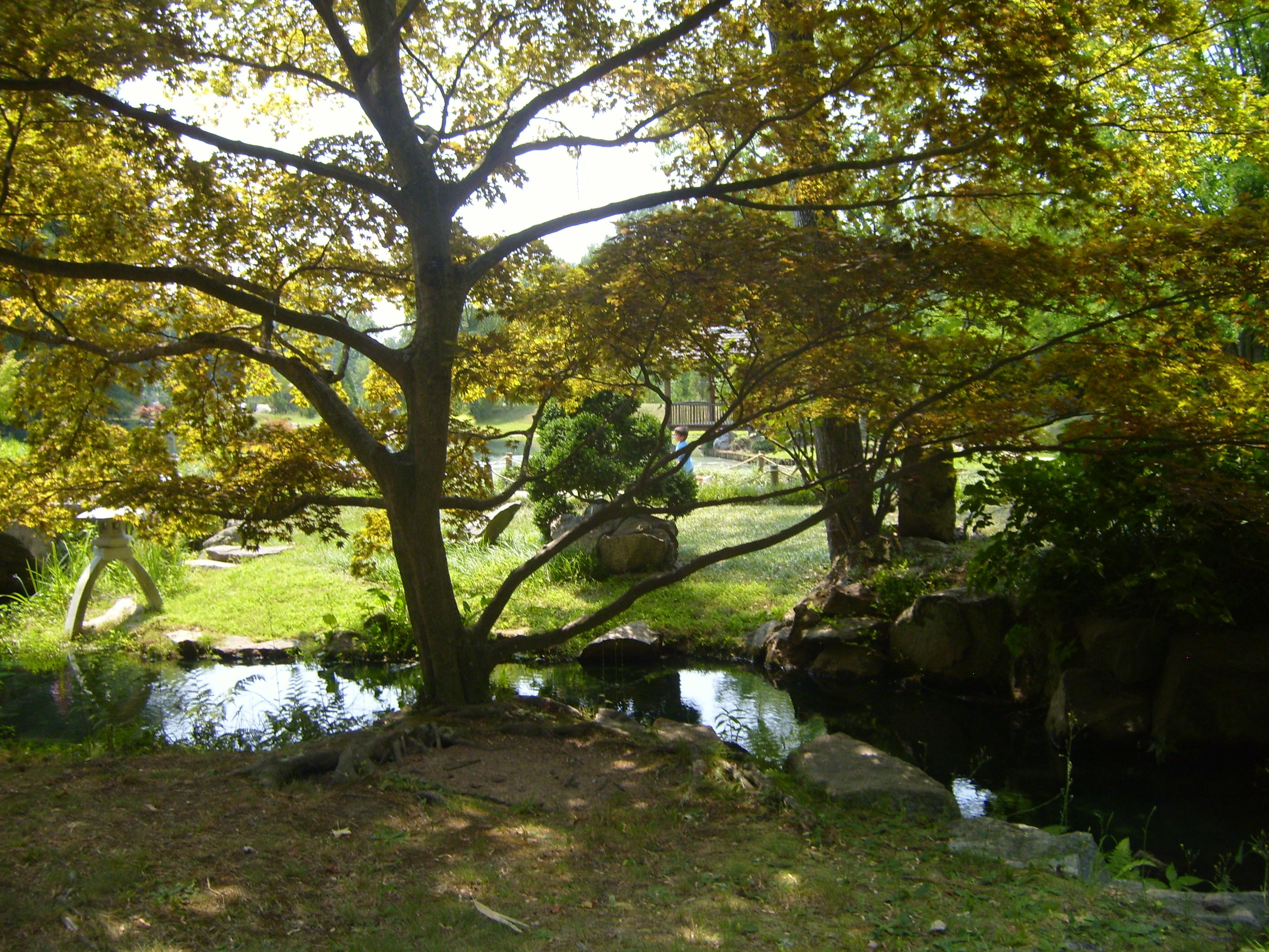 maymont tree