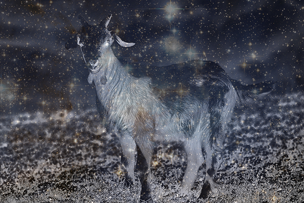 Kratka priča: Koza