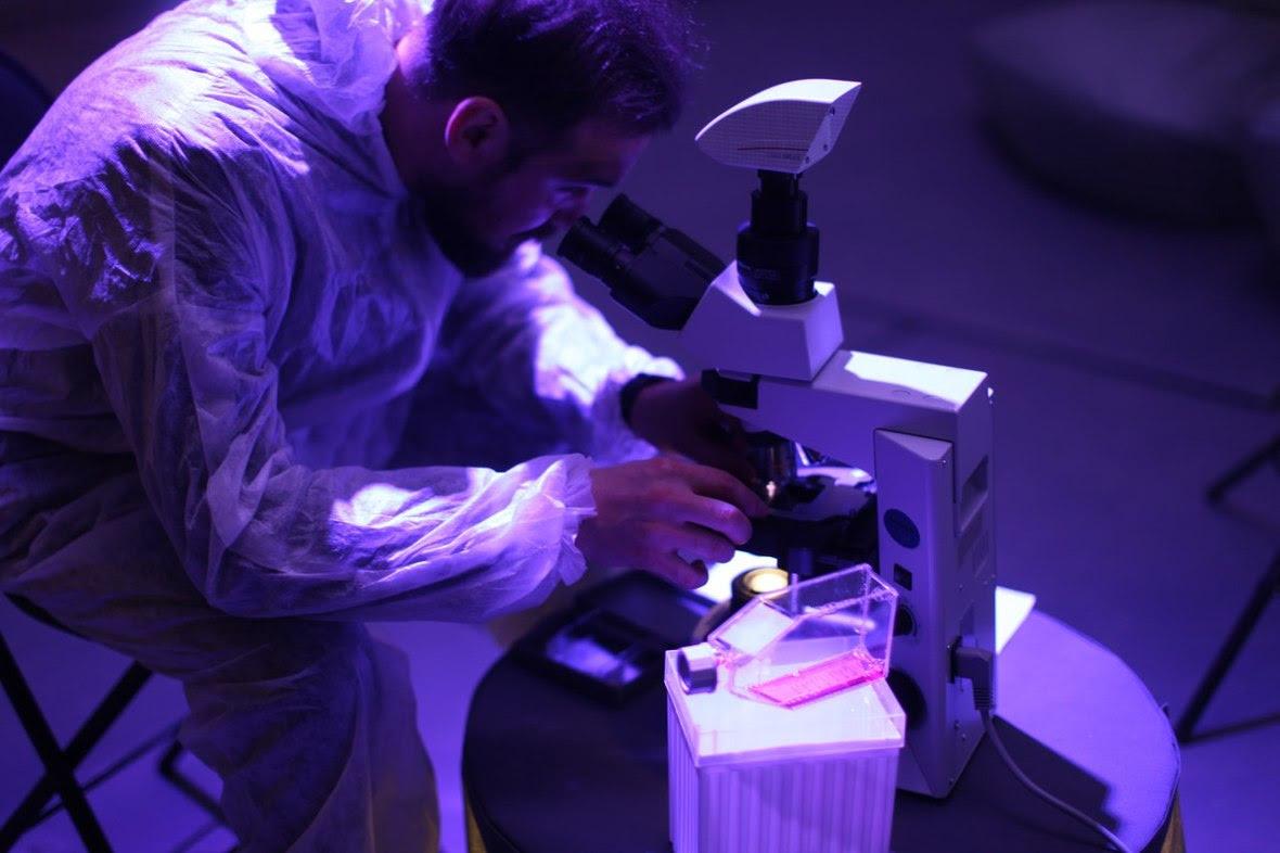 BIOCAD инсталлировал раковые клетки в современное искусство