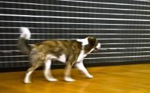 Mostra di Muybridge ricostruzione in chiave sequenza con cane alle Stelline