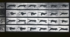 Movimenti del gatto