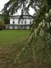 Il Museo visto da un pino secolare