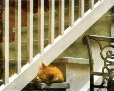 Small Treasures 2016 : Resident Kitty, by Kathleen Hoevet
