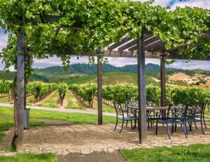 Image of a vineyard by Vivian McAleavey - Summer Daze July 2020 members exhibit