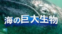 海の巨大生物