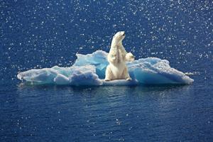 nature-iceberg-polar-bear-art-satire-comedy-humor