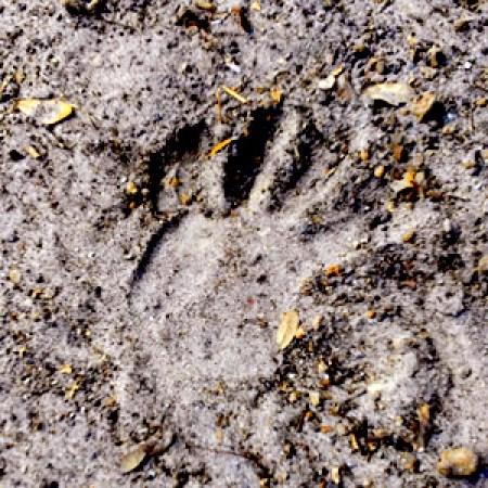 sand-handprint-beginner-guide-art-satire-comedy-humor